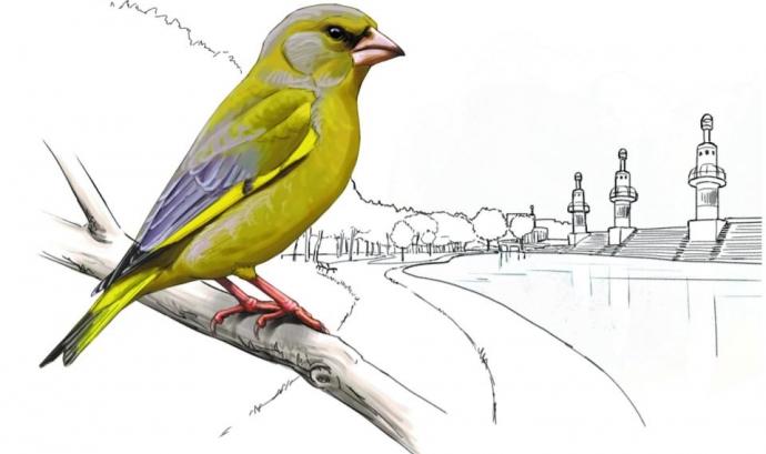 Atles dels ocells nidificants a Barcelona Font: Atles dels ocells nidificants a Barcelona