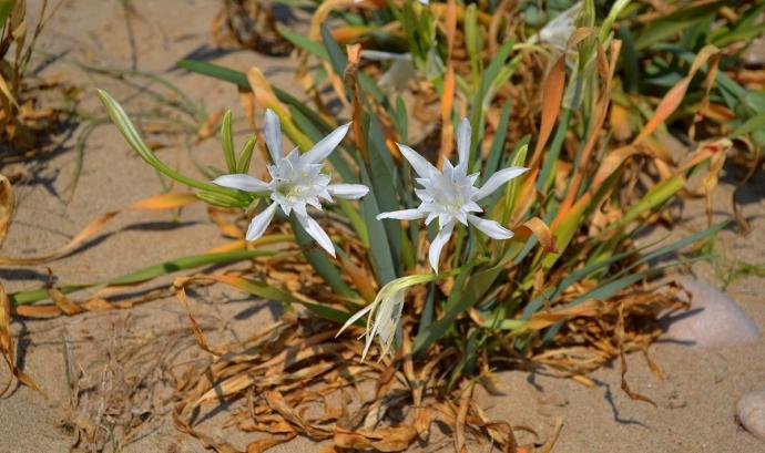 Els Premis Medi Ambient d'enguany posen la mirada en la biodiversitat i la conservació de la natura  Font: Angela Llop per Wikimedia Commons