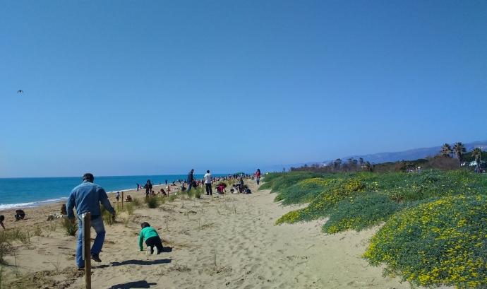 Nois i noies participen en la recuperació de les dunes de Castelldefels