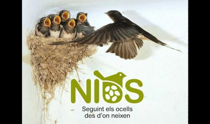 Nius.cat és un portal de ciència ciutadana per localitzar nius d'aus