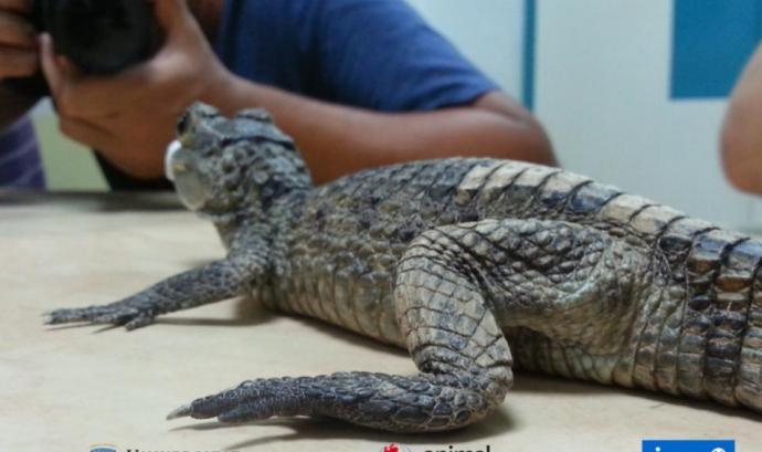 Postgrau sobre Coneixement del Món animal: Educació Sensibilització i Sensibilització Font: Animal Latitude