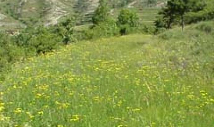 Els prats de dall reuneixen una gran biodiversitat