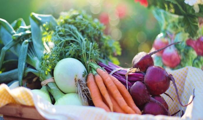 """La Fundación Triodos promou l'agricultura social i els horts ecològics amb el projecte """"Huertos Educativos Ecològicos"""""""