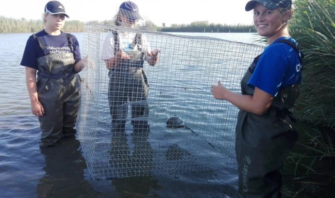 Es poden fer estades de voluntariat ambiental a la reserva de Riet Vell al Delta de l'Ebre en qualsevol moment de l'any. Font: Riet Vell
