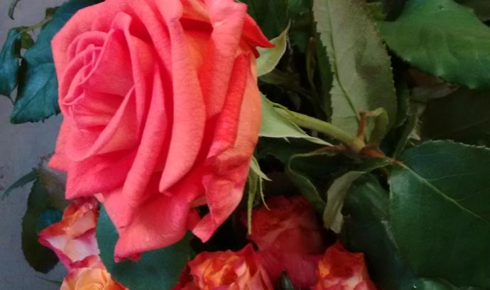La campanya Roses Sense Espines vol fer reflexionar sobre el que hi ha darrera la producció i consum de roses Font: @formenteril