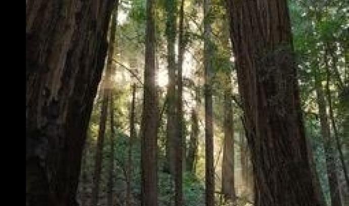 Jornada tècnica a Olot entorn les potencialitats terapèutiques dels boscos madurs (imatge: pinterest/Britnney Lauren)