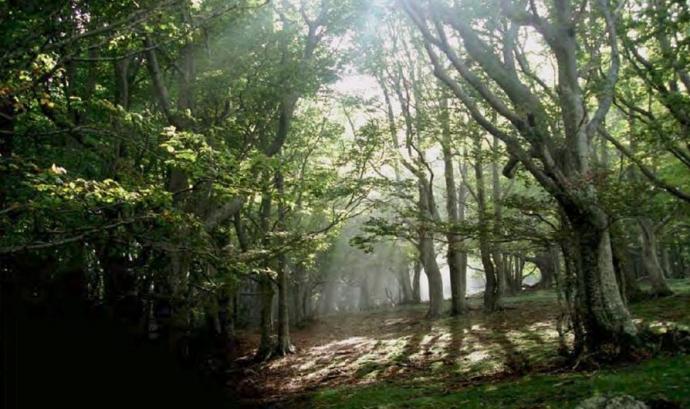 Catalunya és terra de boscos (imatge:creaf) Font: