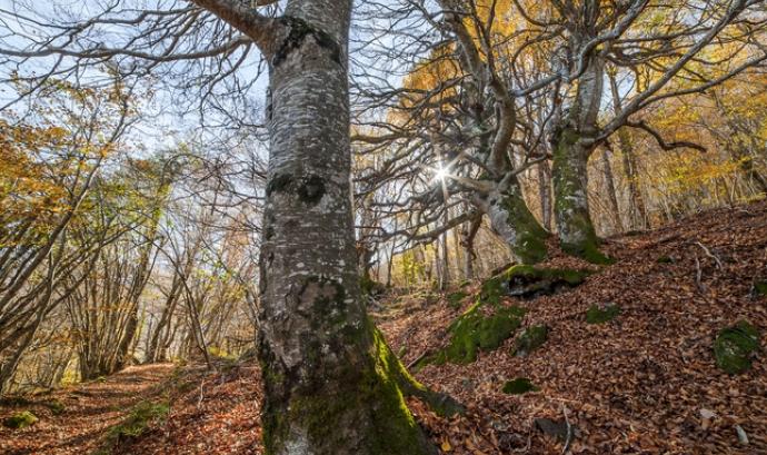Espais forestals dels Pirineus catalans. Font: Marta Bretó