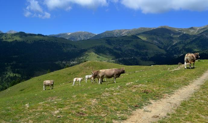 Els prats i les pastures d'alta muntanya del nou Parc Natural de les Capçaleres del Ter i del Freser (imatge:wikimedia commons) Font:
