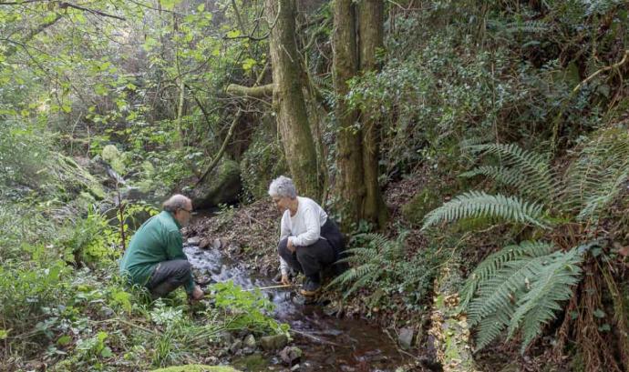 Voluntaris mesurant la riera de Vallcàrquera a El Figaró (imatge: Associació Hàbitats)