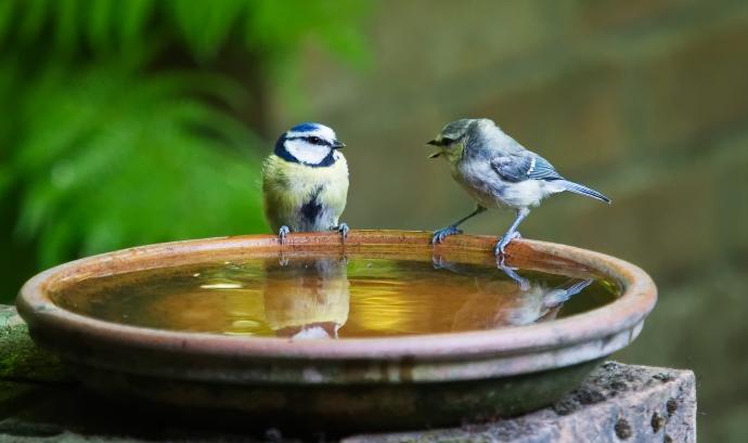 Dos ocells es comuniquen Font: Andrew Martin (Pixabay)