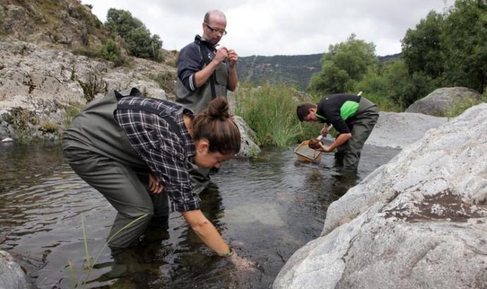 Jornada de voluntariat ambiental per la captura de cranc invasor al riu Glorieta (imatge: Associació Cen)