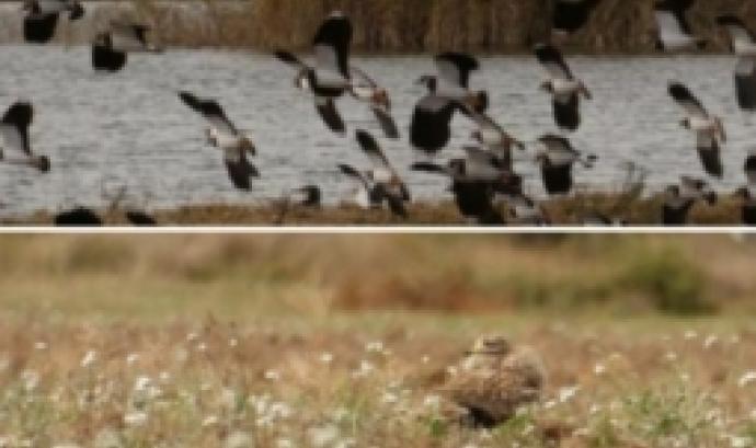 Curs d'ornitologia amb l'associació Limnos