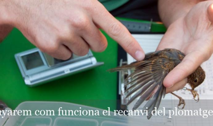 Curs flash d'introducció a l'anellament del Delta del Llobregat el 3 de novembre