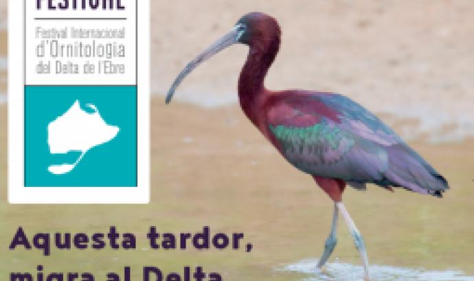 El Delta Birding Festival se celebra del 20 ak 22 de setembre al Delta de l'Ebre