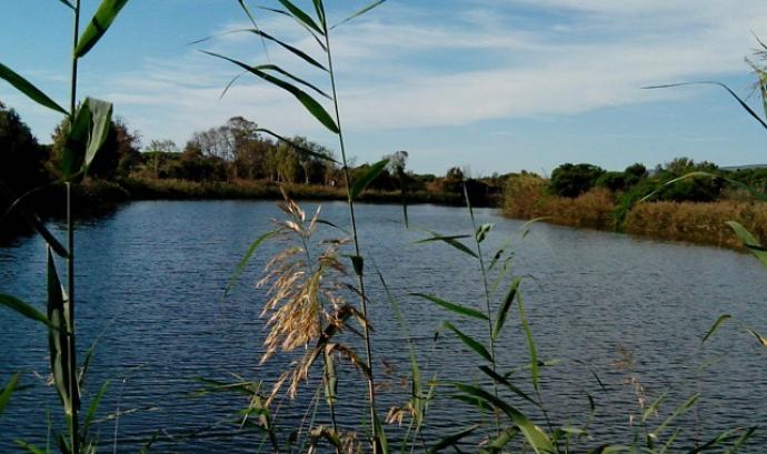 Curs d'introducció a l'ornitologia al Delta del Llobregat