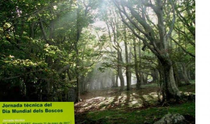 Jornada tècnica Dia Mundial dels Boscos  (imatge: creaf)