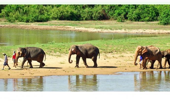 El blog El caballo de Nietzsche recull l'experiència de voluntariat amb elefants de Sara Hernández (imatge:elephantnaturepark.org)  Font: