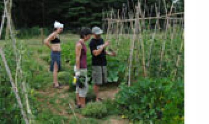 Aprenent a conreuar un hort professional ecològic amb la Fundació Emys (imatge: funfacioemys.com)