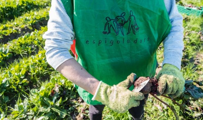 La Fundació Espigoladors és una empresa social que treballa per l'aprofitament alimentari d'una manera transformadora, inclusiva, innovadora, participativa i sostenible. Font: Glòria Solans. Font: Font: Glòria Solans.