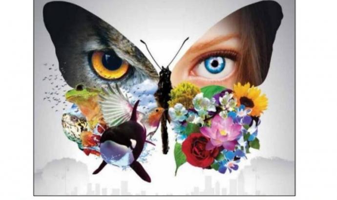 Es busca voluntariat pel projecte de seguiment de la biodiversitat al Solsonès BioSol (imatge: Grup de Natura Solsonès) Font: