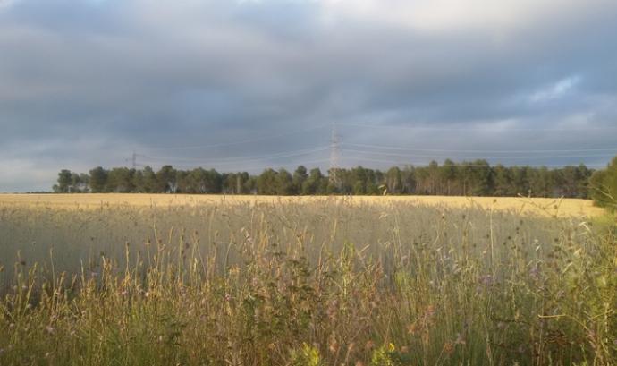 Entitats vallesanes impulsen la creació del Parc de la Grípia Ribatallas (imatge: wikilok/jomateixa) Font: