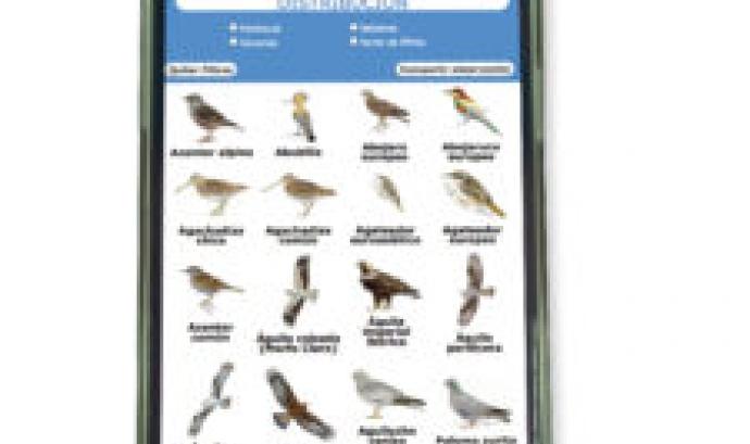 Seo Bird Life presenta una web app per identificar aus (imatge: seo.org) Font: