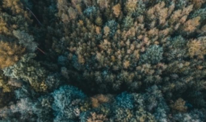 Una oportunitat per viure la natura de ple i descobrir què fan els boscos per tu.