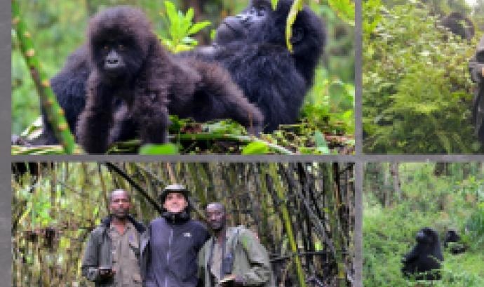 """Conferència: """"Goril·les de muntanya mig segle després de Dian Fossey"""""""