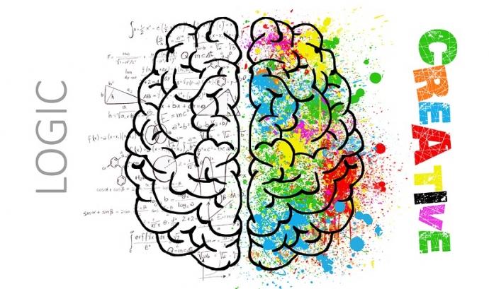 Cervell dividit Font: Pixabay