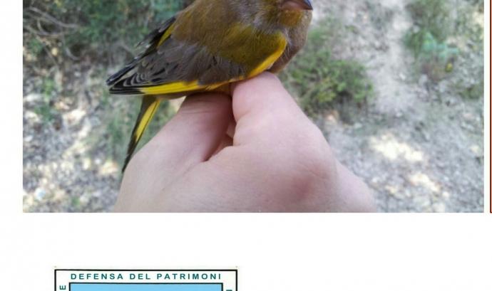 Anellament científic d'ocells amb Limnos (imatge: limnos.org)