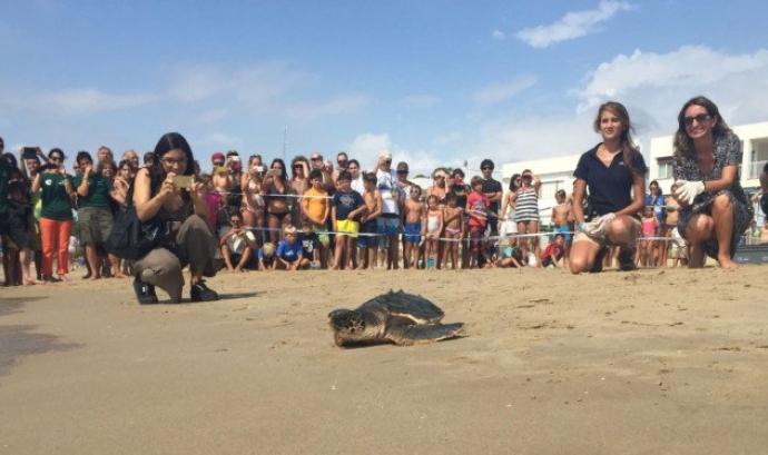 Alliberament de tortugues de Fundació CRAM