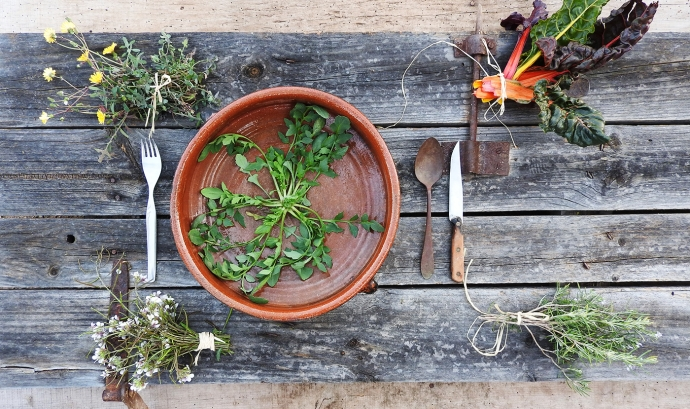 El col·lectiu Eixarcolant organitza una jornada gastronòmica que busca recuperar els usos tradicionals de la vegetació. Font: Col·lectiu Eixarcolant