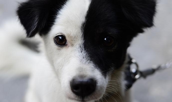 Cada any es troben 2.000 gossos i gats al carrer. Font: Unsplash. Font: Font: Unsplash.