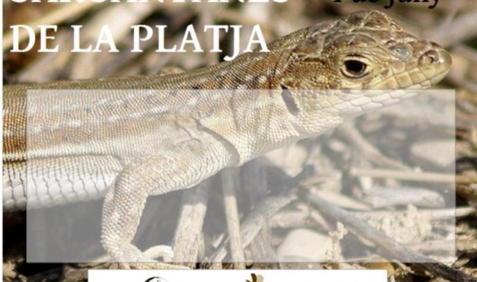 Visita guiada gratuïta per descobrir les sargantanes de la platja natural dels Muntanyans de Torredembarra (imatge_ gepec.cat)