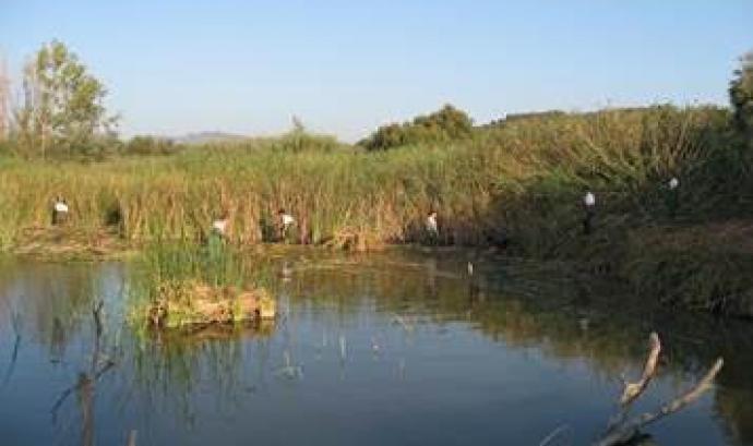 Jornada de voluntariat ambiental a la llacuna de Sebes el diumenge 30 d'octubre (imatge: reservanaturalsebes.org)