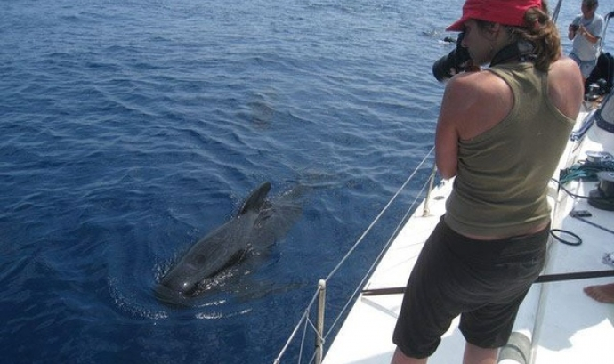 """Conclou el projecte """"Jo també visc al Mediterrani"""", d'Animal Latitude i Submon (imatge:submon.org) Font:"""
