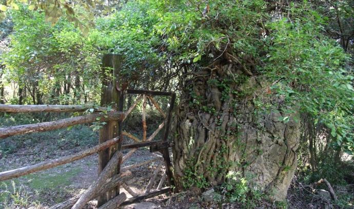 Testing fotogràfic de Biodiversitat Virtual a Mas de Gomis, Alcover (imatge: blog.assoc-cen.org)
