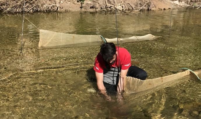 La Sínia treballa per la conservació de la biodiversitat vinculada a l'entorn fluvial del riu Gaià. Font: La Sínia
