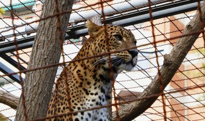 Animal Latitude organitza la trobada Encuentros Animales sobre el ZooXX1 (imatge: animallatitude.org)