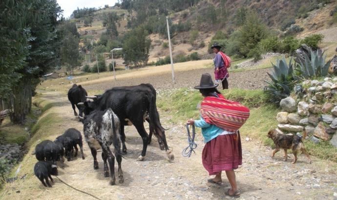 Comunitat d'Huapra, als Andes Peruans (Font: Lluís Miquel Pla) Font: