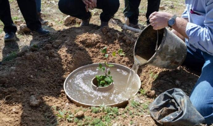Donut Biodegradable Cocoon Font: El Confidencial