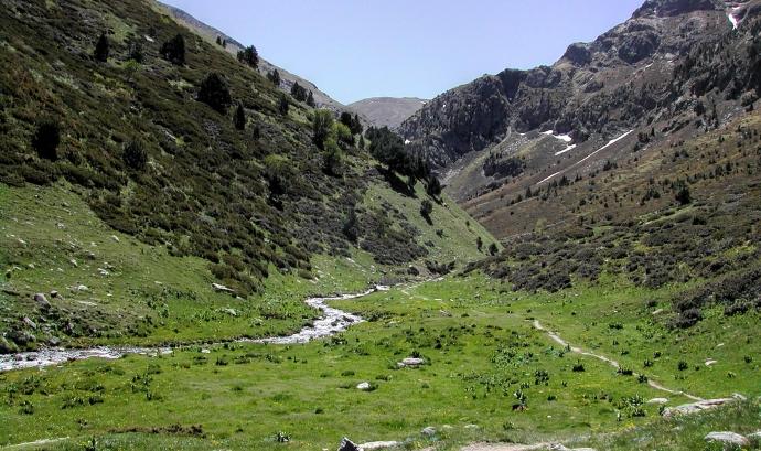 Sortida de botànica a la Vall d'Eina, amb l'Adenc (imatge: wikimedia.org)