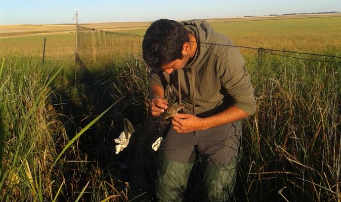 Un home caça ocells amb una xarxa