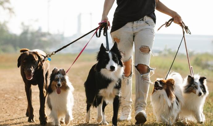 Les protectores i refugis d'animals accepten persones voluntàries per dignificar la qualitat de vida dels animals sense llar. Font: Llicència CCO.