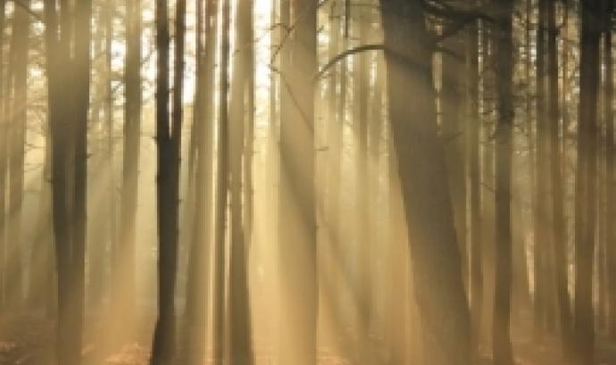 El congrés pretén crear un espai de trobada per al coneixement i intercanvi d'experiències en l'ús i la valorització́ de l'ecosistema forestal. Font: Unsplash.