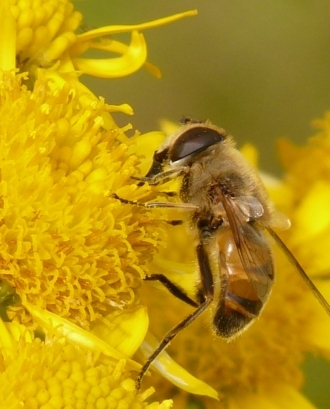Ajuts al sector apícola per a pol·linització 2020
