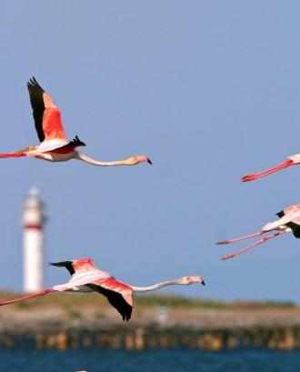 La ciquena edició del Delta Birding Festival se celebra del 21 al 23 de setembre a MónNatura Delta.