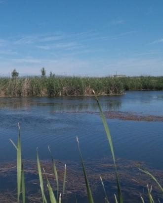 Imatge d'una llacuna al Delta de l'Ebre, amb Plàncton