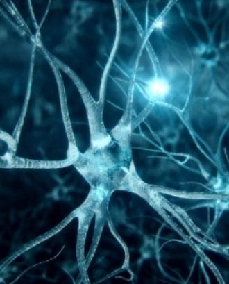 L'ELA, una de les pitjors malalties neurodegeneratives